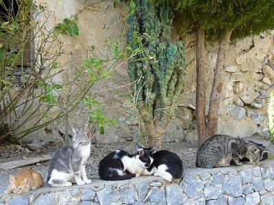 Kočky najdete všude - Tato kočičí parta je z kláštera Praveli