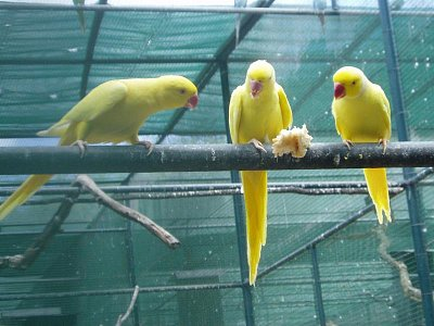 Papoušci parku Casela