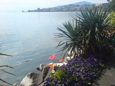 Montreux (nahrál: Alla Mogilevska)