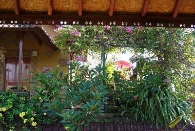 Příroda na Bali (nahrál: admin)