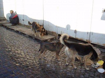 Hladoví psi (nahrál: admin)