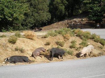 siesta u silnice (nahrál: Vlaďka)